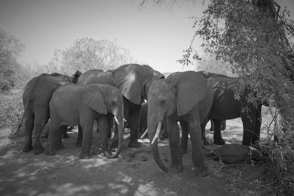 botswana-postdsc07893