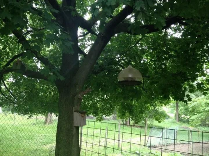 A bluebird house and a large bird feeder.