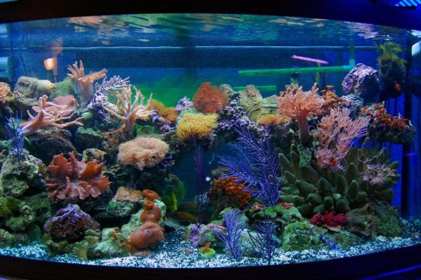 picture of colored aquarium pebbles in a fish tank