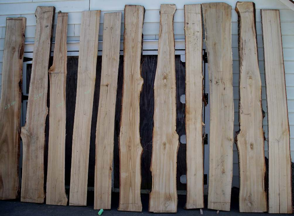 RARE FIND AMERICAN CHESTNUT Pictures Of Current Stock