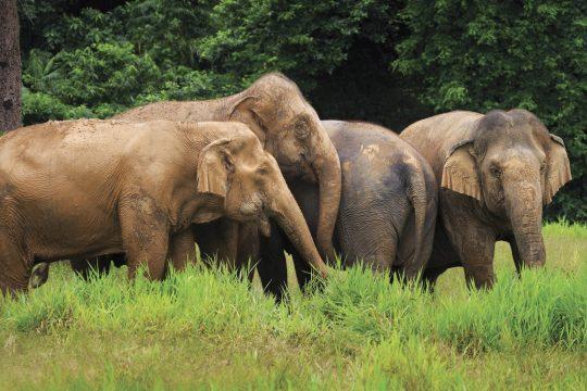 elephants hill