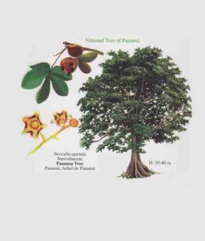 Panama's National Tree