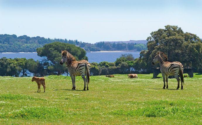 Zebras at Brijuni National Park