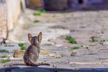 Animal treatment and protection in Croatia