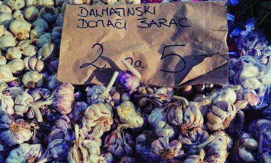 """Garlic Šarac - Češnjak """"Šarac"""" in Croatia"""