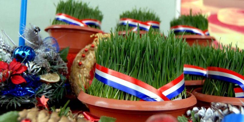 "Christmas wheat, called ""Božićna pšenica"" in Croatian"