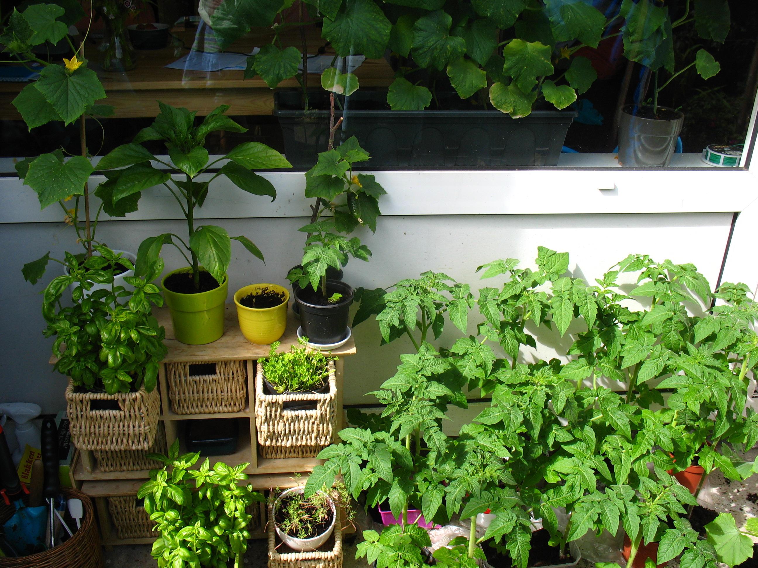 Urban Gardening in Amsterdam - Expat Republic on Gardening  id=47361