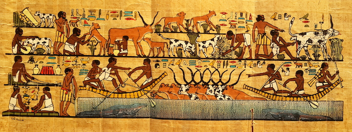Egyptian Papyrus Art - cattle