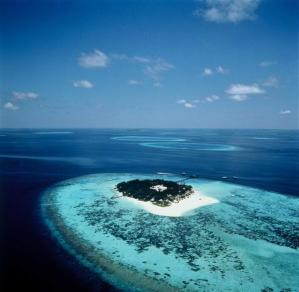 Part of the huge coral reef that is the Maldives...