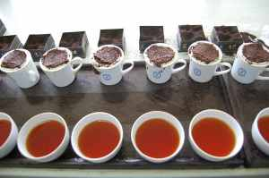 tea-samples-brewed-and-ready