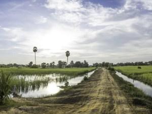 Siem Reap rizires