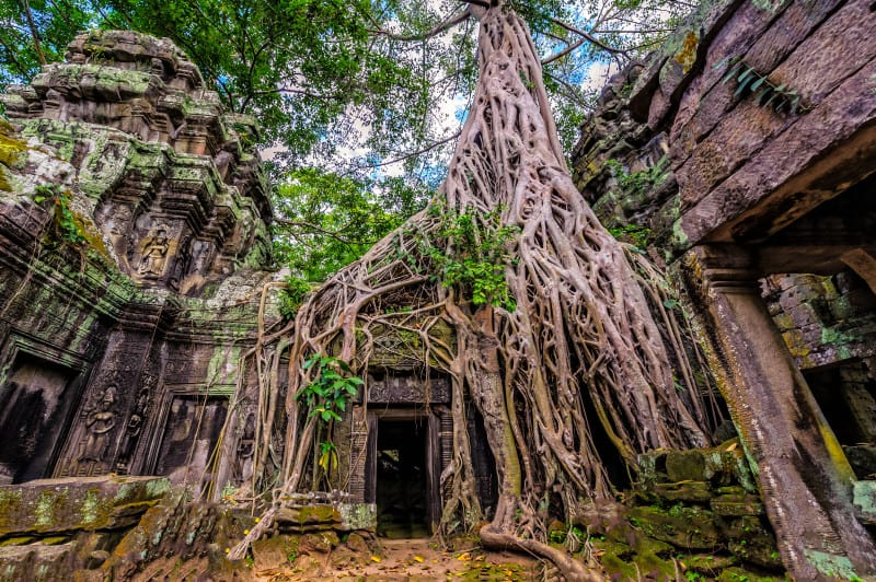 Panorama of ancient stone door and tree roots, Ta Prohm temple r