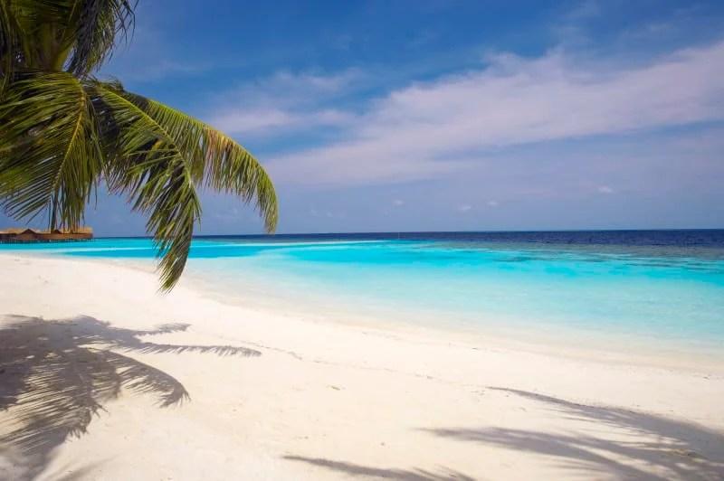 lily beach (3)