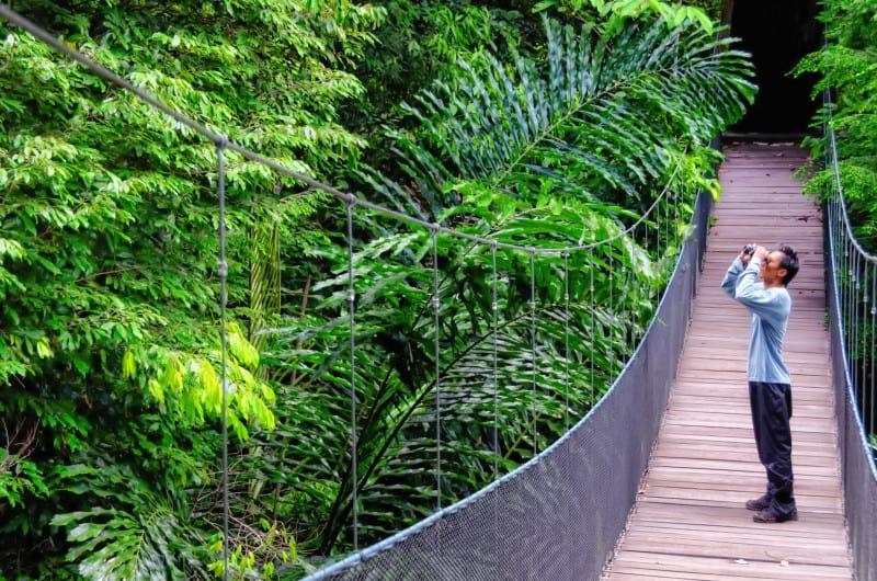 Man on canopy in Borneo jungle | Is Borneo safe?