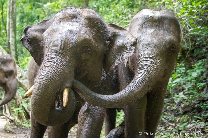 elephants-AQ2I0168 copy 8