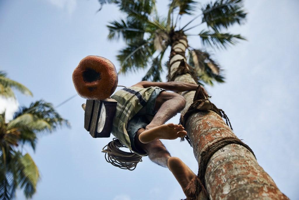 Planning a trip to Sri Lanka   Toddy Tapper