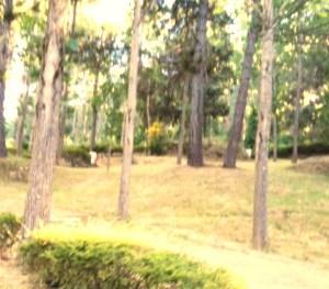 Camping Valle de Iruelas en plena Reserva