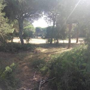 Ruta 4×4 por Parque Natural Doñana