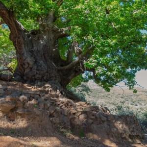 Naturaleza cerca de Marbella