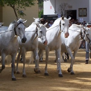 Visita los Sábados Yeguada Cartuja en Jerez