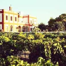 Casa de viña en el Puerto de Santa María en la provincia de Cádiz