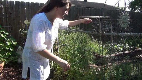 Helping to Protect Your Tomatoes from the Birds