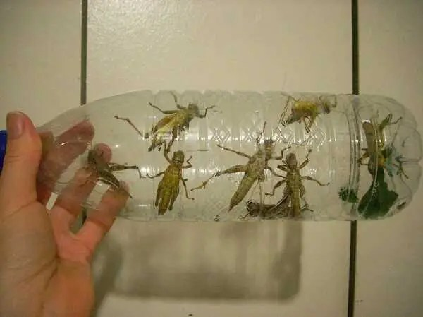 grasshoppers in bottle