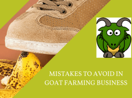 mistakes in raising goat for business