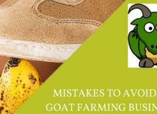goat farm mistakes