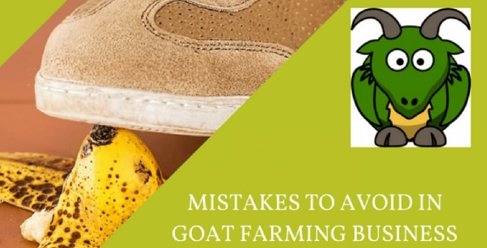 goat farm mistakes