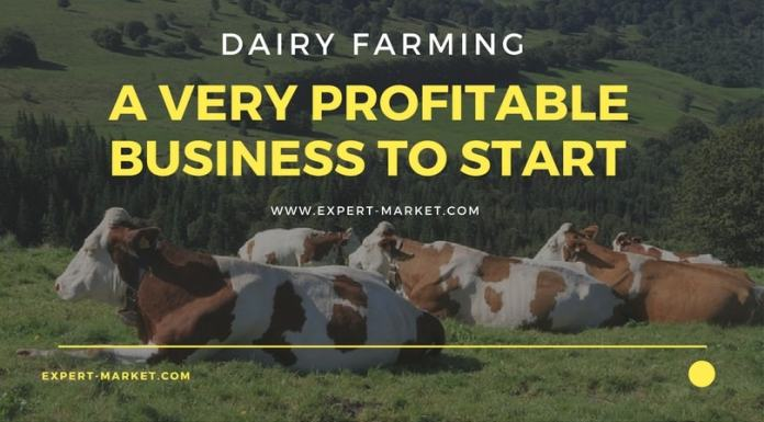 profitable dairy farm business plan