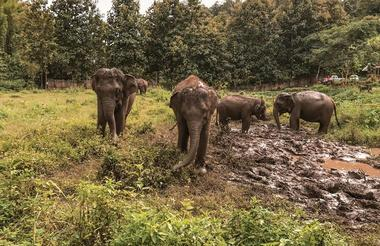 Chiang Mai eco elephant centre