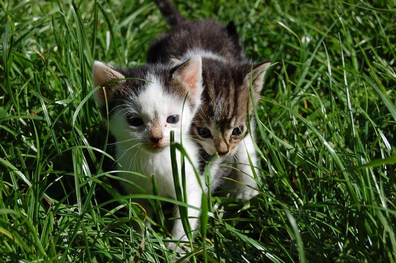 Giftige Ungiftige Pflanzen Für Katzen