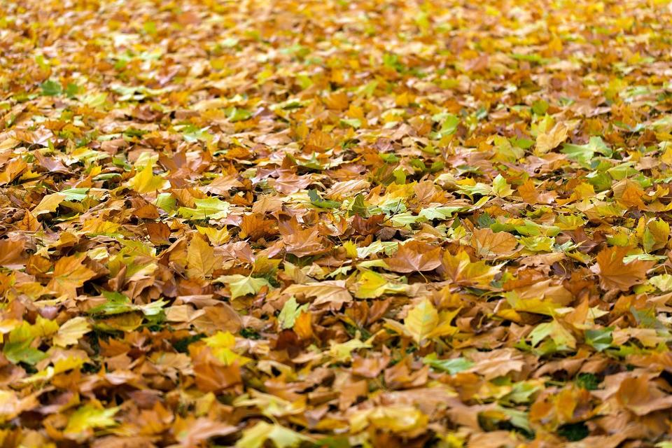 Sauger für Laub im Herbst