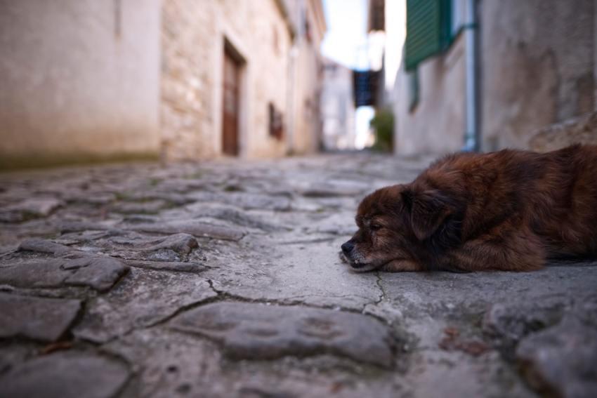 Hunde wartet auf Hundefutter