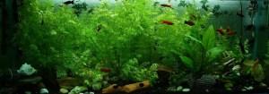 Goldfischglas verschiedene Fische