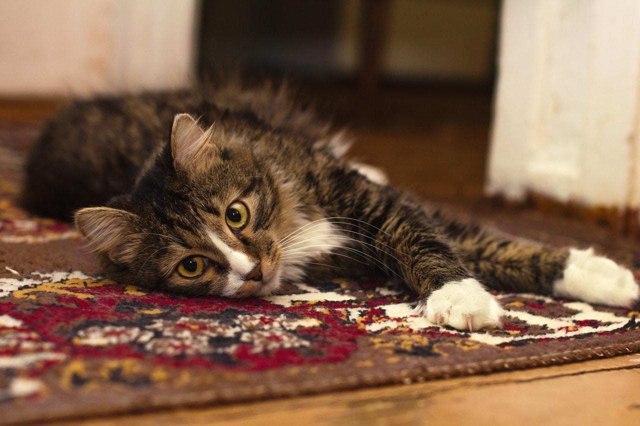 Auch Haustiere fühlen sich auf Heizteppichen pudelwohl.