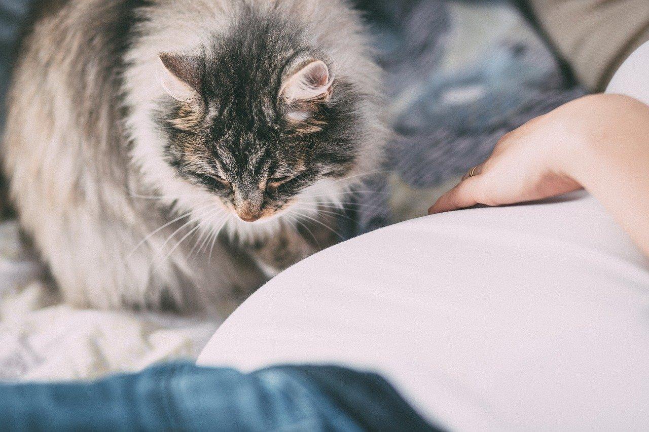 Gute Allergiker-Staubsauger entfernen Tierhaare sogar aus Textilien.