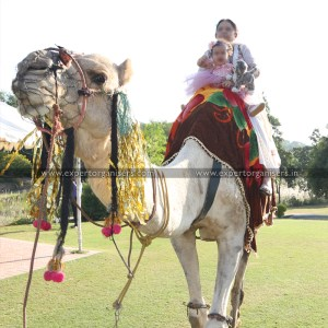 Camel Ride for Kids Birthdays Parties