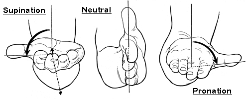 wrist-supination-neutral-pronation