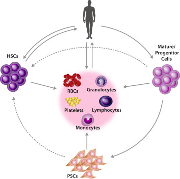 Development of autologous blood cell therapies ...