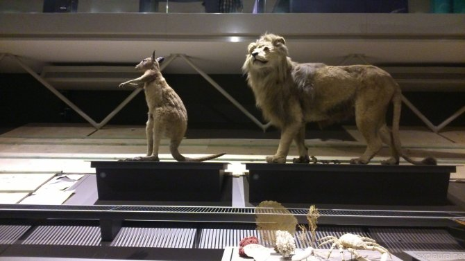 Simba plus kangaroo... seems legit.