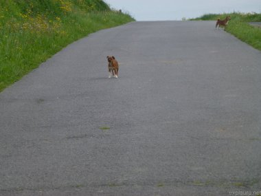 This little puppy chased after Rie, trying to scare her off.