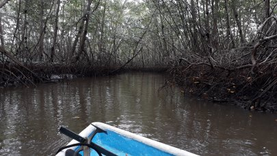 Cruising down amongst the mangroves.