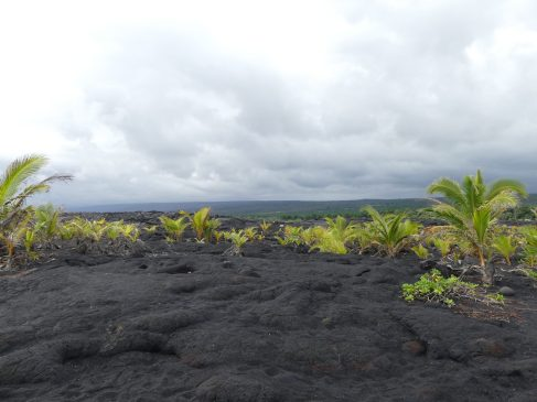 voyage-hawaii-big island Kaimu (23)