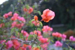 voyage-indonesie-bali-fleur