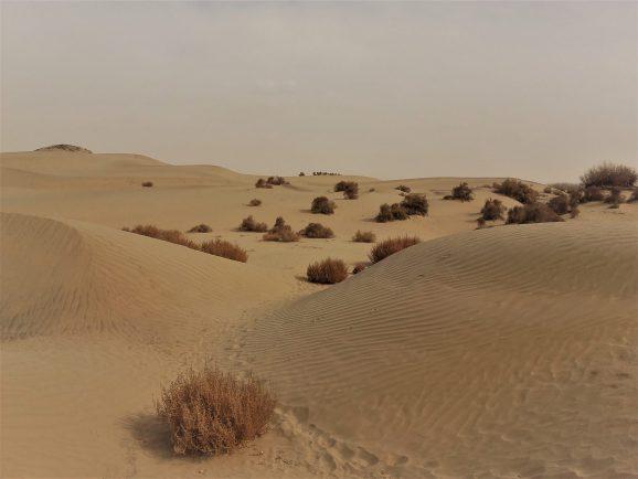 dunes Taklamakan.jpg