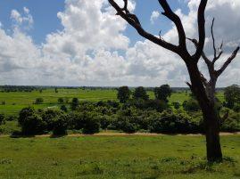 voyage-sri-lanka-route-trincomalee-ritigala-04