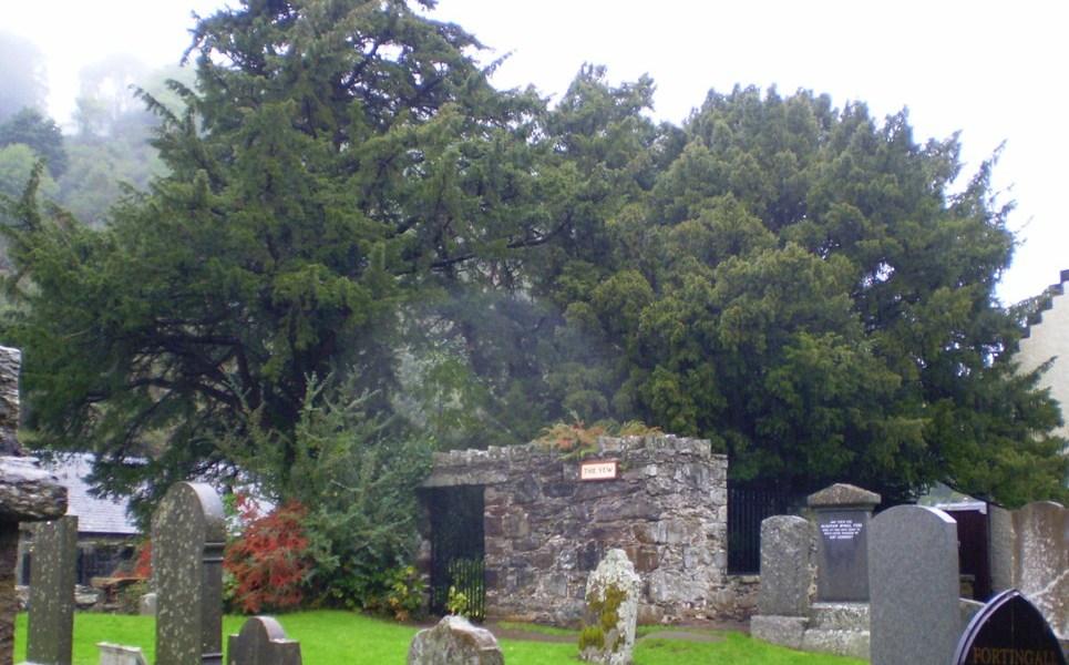 Fortingall Yew - Explora Escocia- Original photo by Rick_Johnson