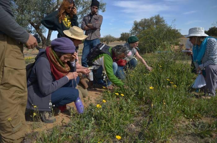 8 plantes sauvages comestibles en Tunisie